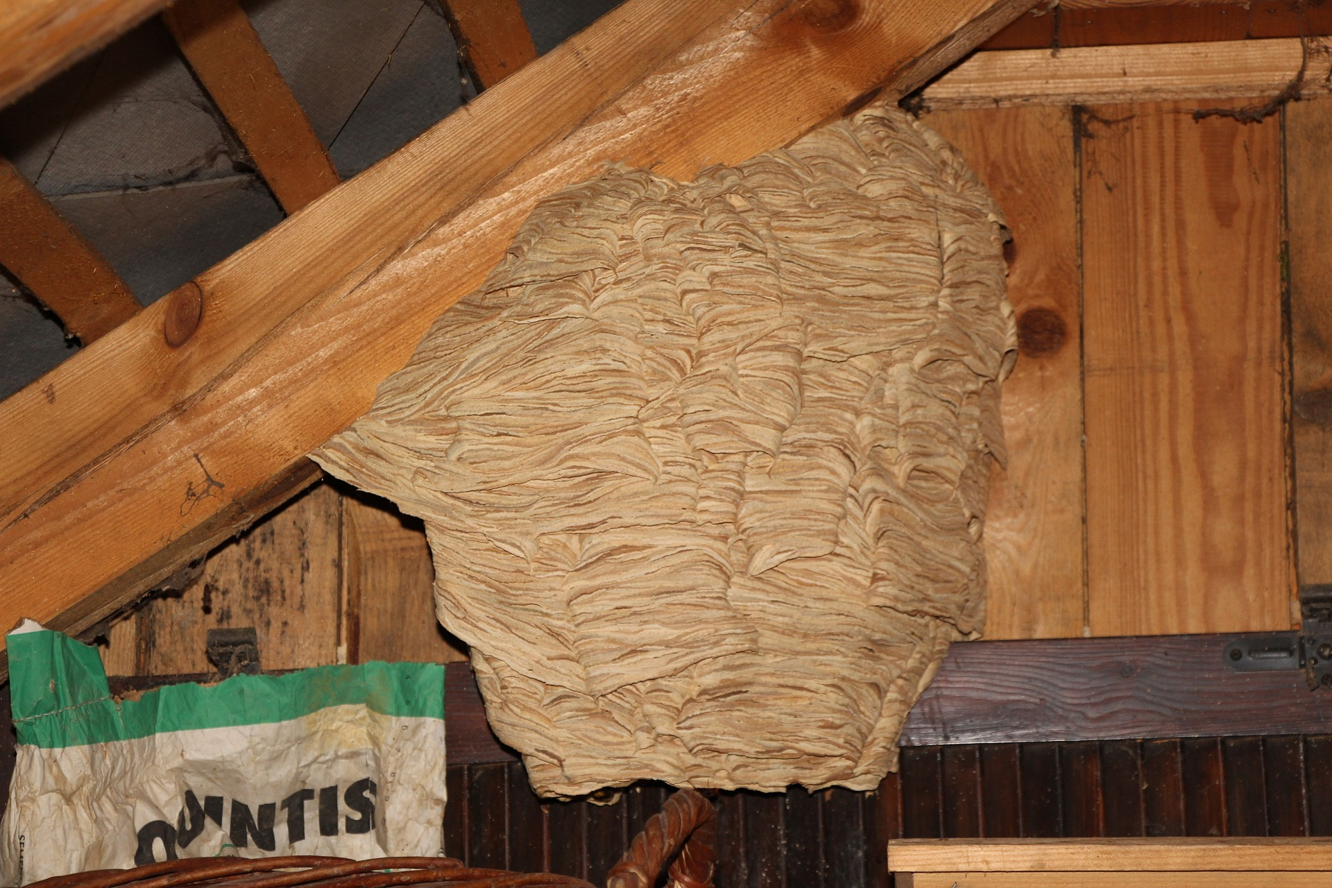 exterminateur nid de frelons europeen etrechy 91580
