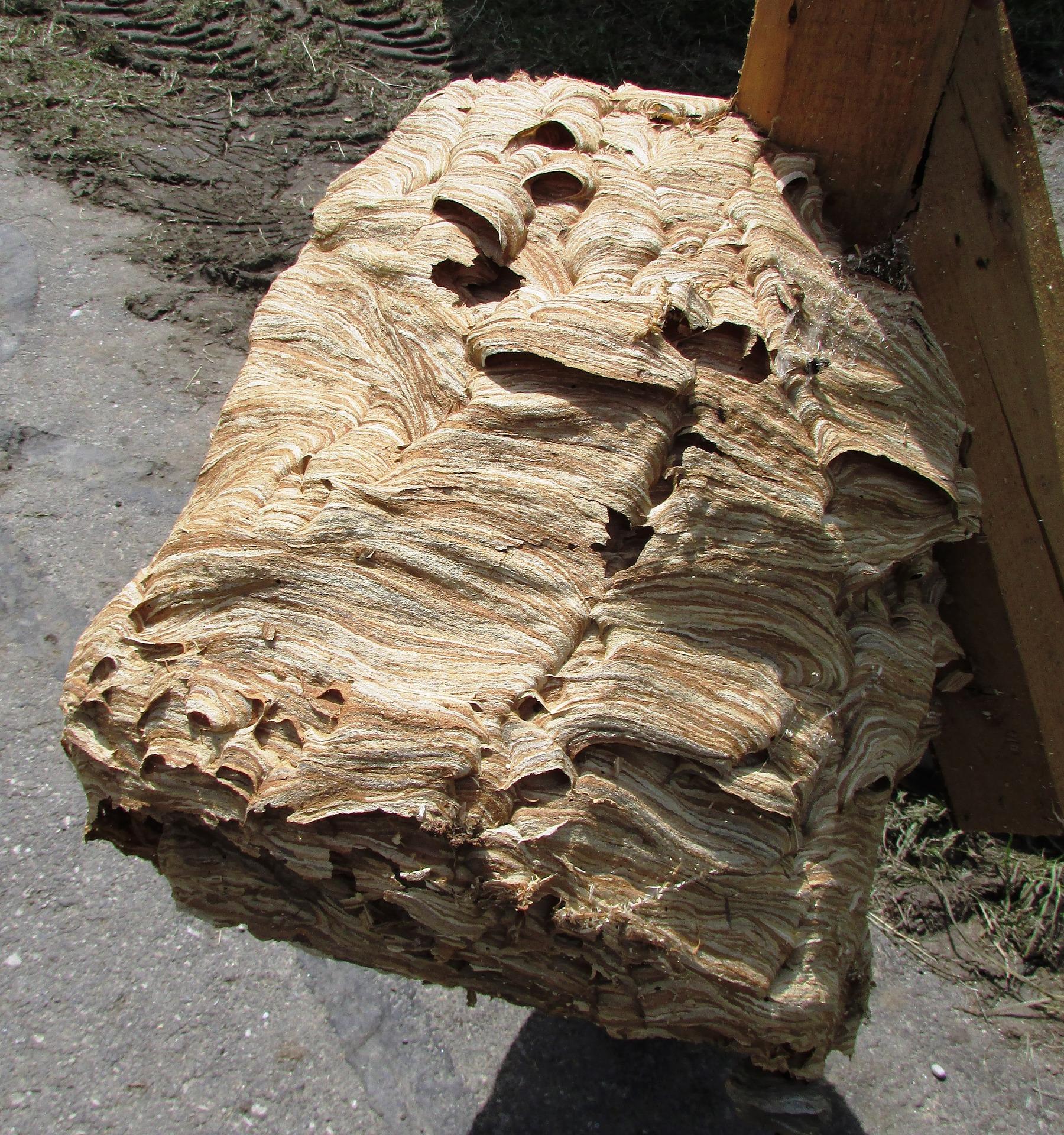 destruction nid de guepes etrechy 91580